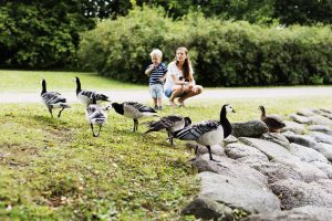 Young woman with son watching geese in park